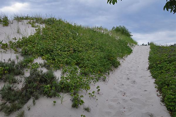 Crane Beach Ipswich